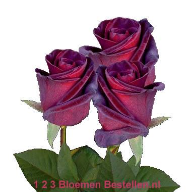Roos Black Baccara