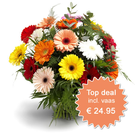 Beste Deal 3 - incl vaas