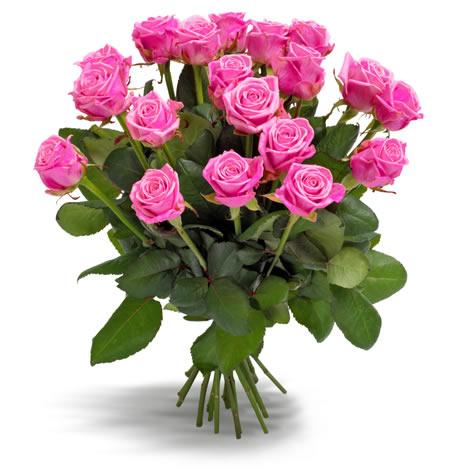 Aqua Roze rozen