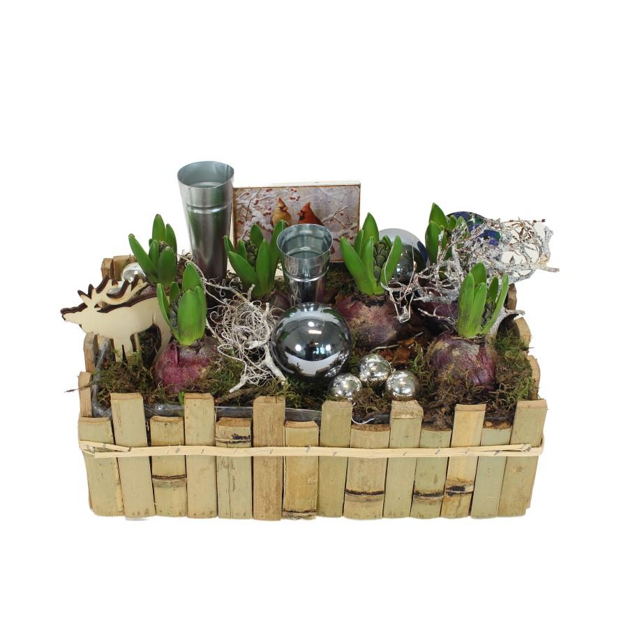 Kerst wintertuin Hyacinten