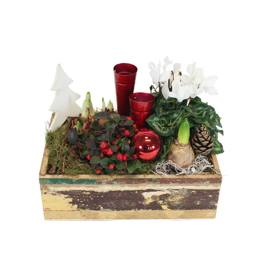 Kerst wintertuin Rood