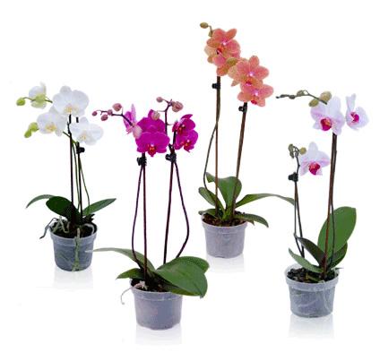 Orchidee 2 Takken