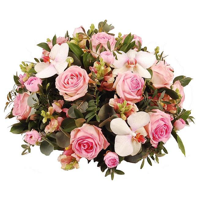 Rouwbiedermeier roze Orchidee