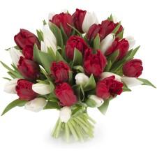 Tulpen wit - rood