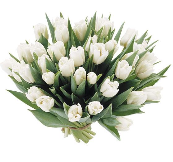 Tulpen boeket wit
