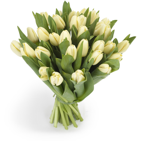 Tulpen boeket creme