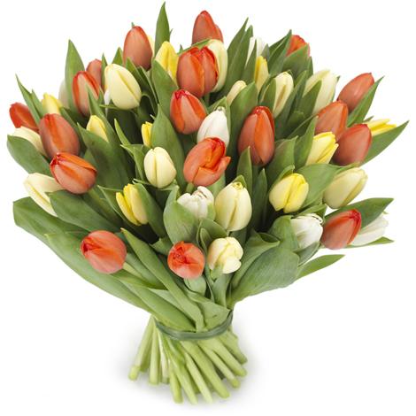 Tulpen boeket kleurrijk