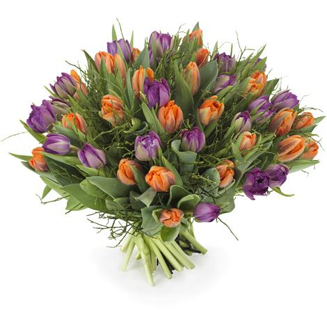 Tulpen oranje - paars