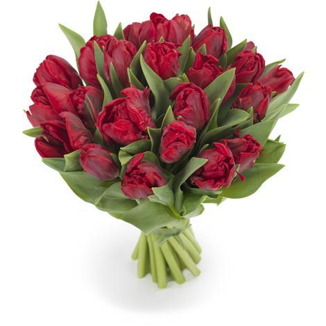 Tulpen parkiet rood